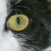 eye-of-little-tiger.jpg